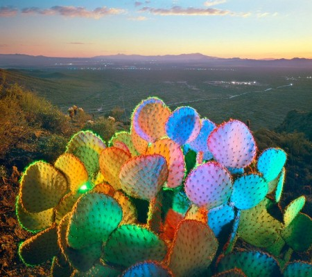 William Lesch  - Prickly Pear over Old Tucson, from Gates Pass, 1991 at Afterimage Gallery