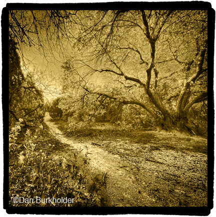 Path in Great Trinity Forest, platinum/palladium over 24k gold leaf photographic print, at Sun to Moon Gallery