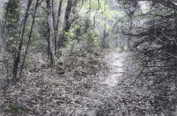 Fine photographic print of path in the Great Trinity Forest