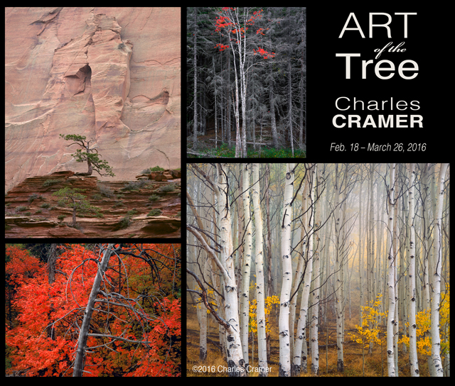 Art of the Tree: Charles Cramer Photography Exhibition