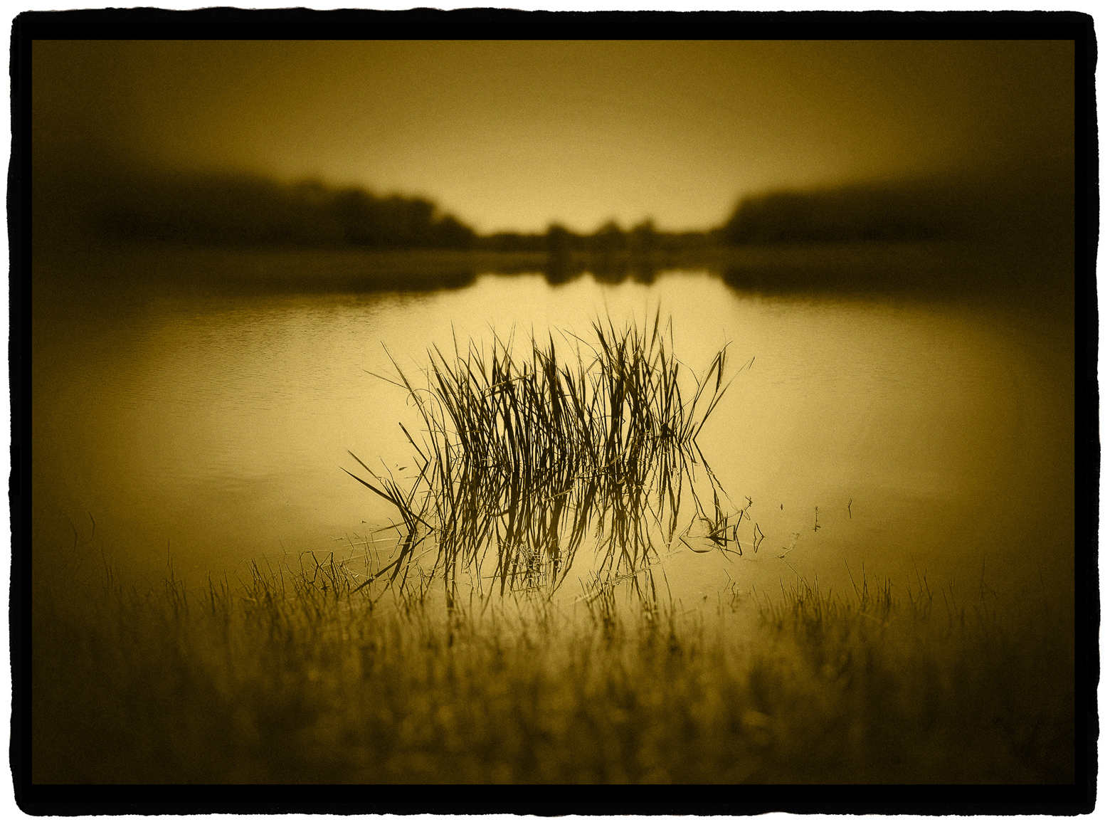 """Grasses on lake, Great Trinity Forest""	   Platinum/Palladium over Gold Leaf Print	  ©Dan Burkholder"