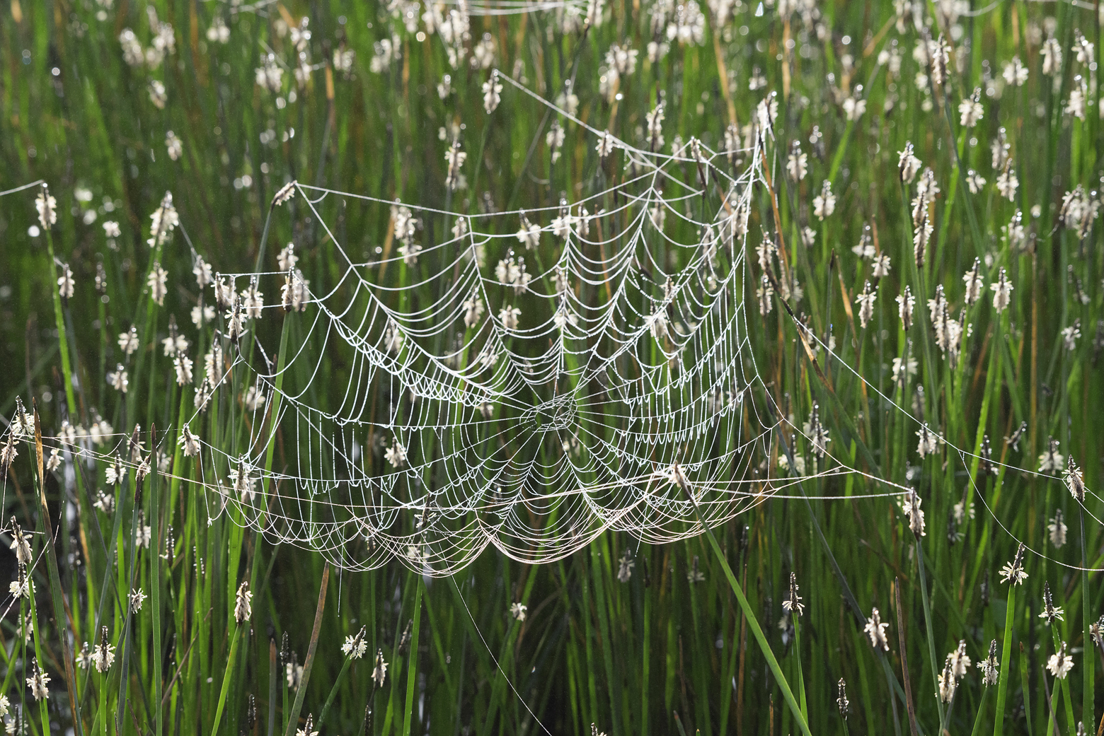"""The tangled web, Great Trinity Forest""	Archival Pigment Print	©R.P. Washburne"