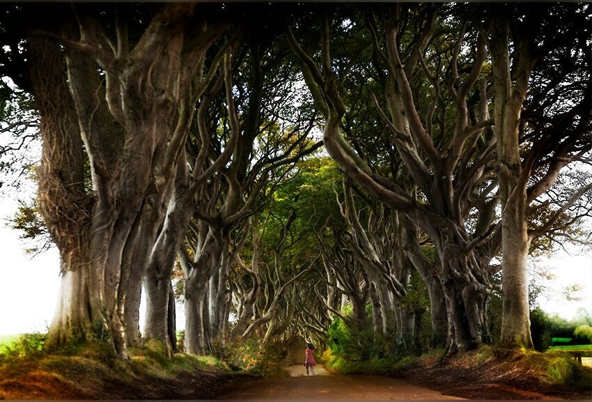 Dark Hedges, 2016